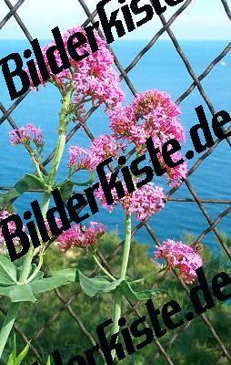 Blume Dost