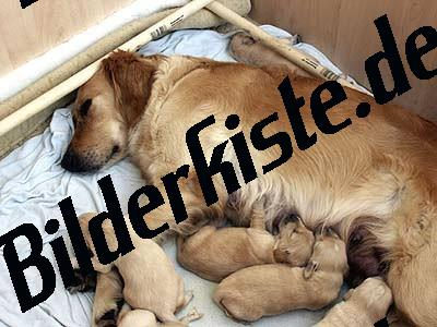 Dog with its puppies