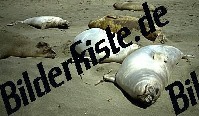 Seehunde am Strand