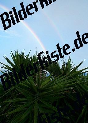 Regenbogen ueber Palme