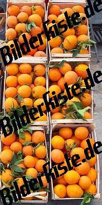 Apfelsinen- Verkaufsstand