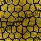 Bilder zum Thema mosaik anzeigen