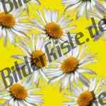 Bilder zum Thema pflanzen anzeigen