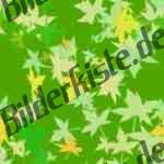 Bilder zum Thema leaf anzeigen