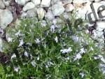 Blumenwiese und Steine