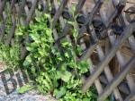 Jaegerzaun mit Pflanzen