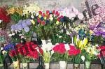 Blumen am Marktstand