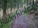 Waldweg im Sommer