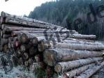 Bilder zum Thema legno a strati anzeigen