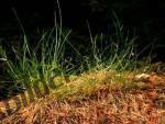 Bilder zum Thema grasbüschel anzeigen