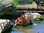 Bilder zum Thema braunbären anzeigen