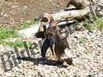 Bilder zum Thema pinguin anzeigen