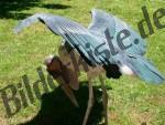 Marabu auf Wiese