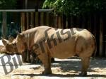 Bilder zum Thema Rhinozeros anzeigen