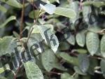 Wassertropfen auf Pflanze