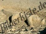 Sandbau Krokodil