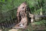 Baum umgestuerzt