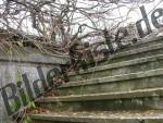 Aeste und Zweige auf Treppen