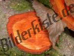Holz Jahresringe