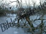 Bäume eingefroren