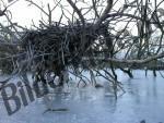 Äste und Zweige eingefroren