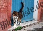 Katze vor Haustuer