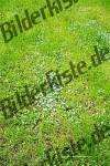 Wiese mit blauen Blumen