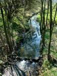 Fluss mit Baeumen