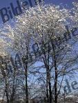 Bilder zum Thema snow anzeigen