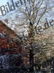 Baum Rotbuche Winter