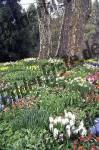 Bilder zum Thema frühlingsblumen anzeigen