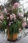 Blumen Orchidee im Topf