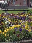 Bilder zum Thema spring time anzeigen