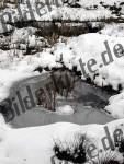 Teich zugefroren