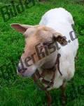 Bilder zum Thema animali di pascolo anzeigen