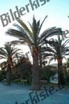 Grosse und kleine Palmen