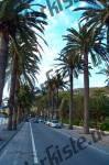 Palmen an einer Strasse